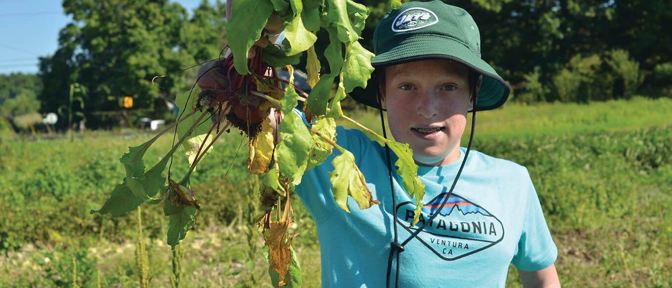 picking beets at summer camp