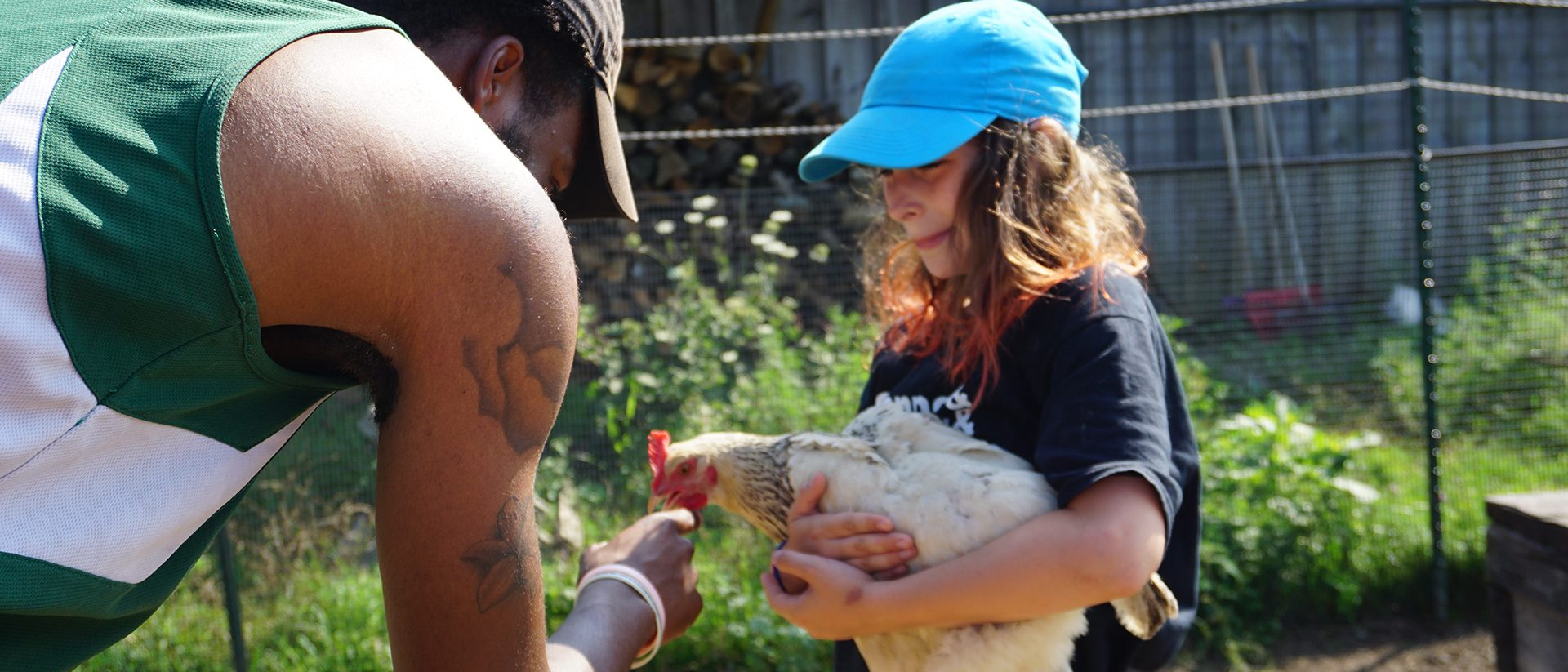 Engaging with farm chickens