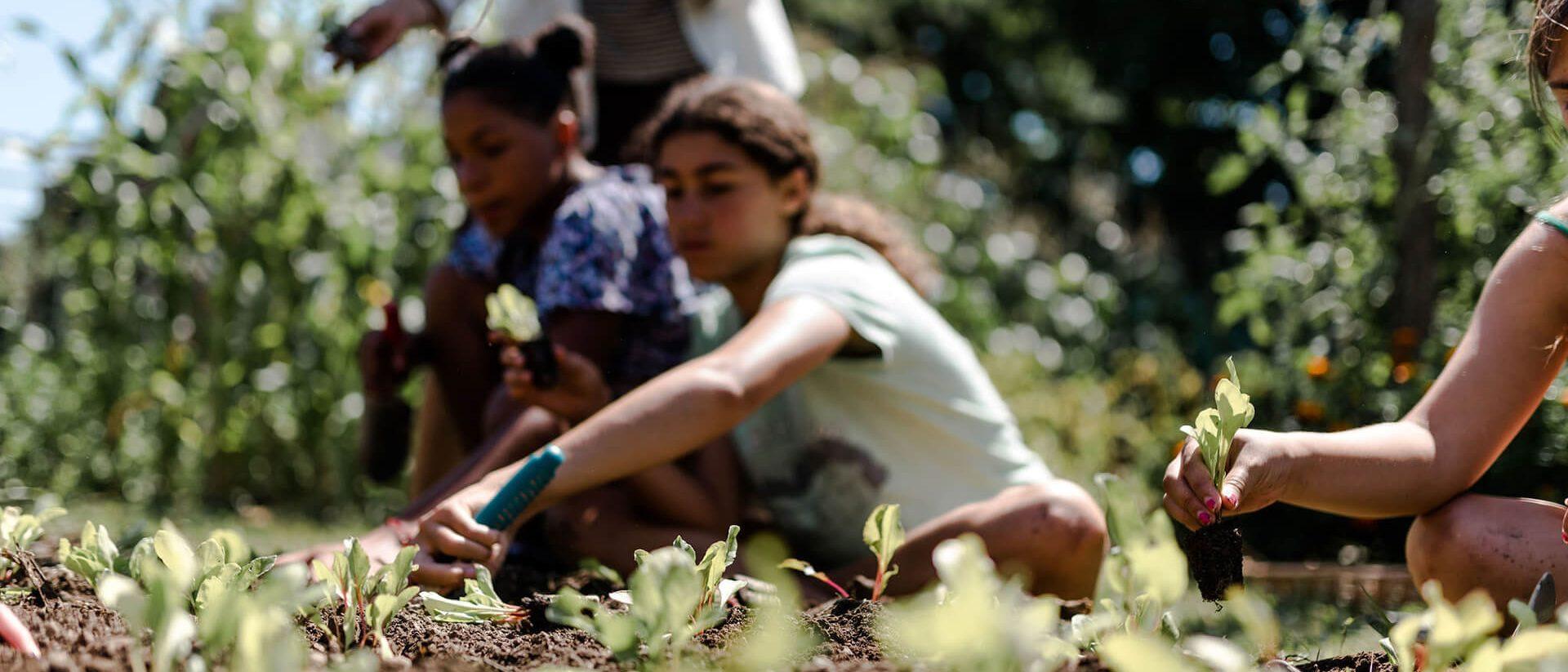 summer campers gardening
