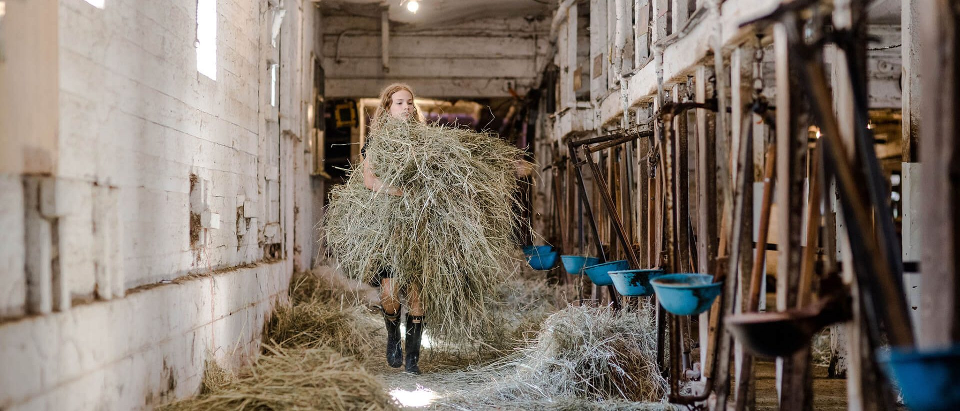 girl putting hay out for cows