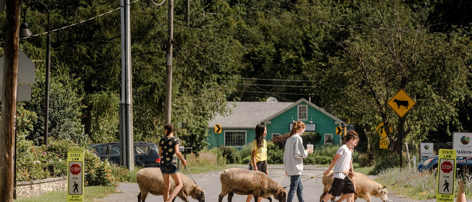 summer campers walking sheep to pasture